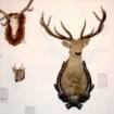 Fotografie 2, Muzeul de Stiintele Naturii din Suceava