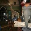Fotografie 8, Muzeul de Stiintele Naturii din Suceava