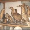 Fotografie 10, Muzeul de Stiintele Naturii din Suceava